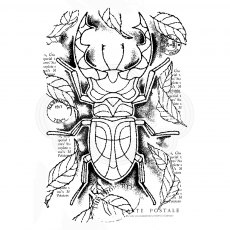 Woodware Clear Stamps - Stag Beetle